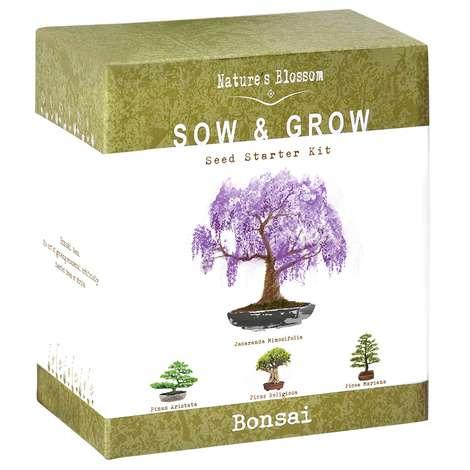 Nature S Blossom Bonsai Grow Kitshi Fabfitfun